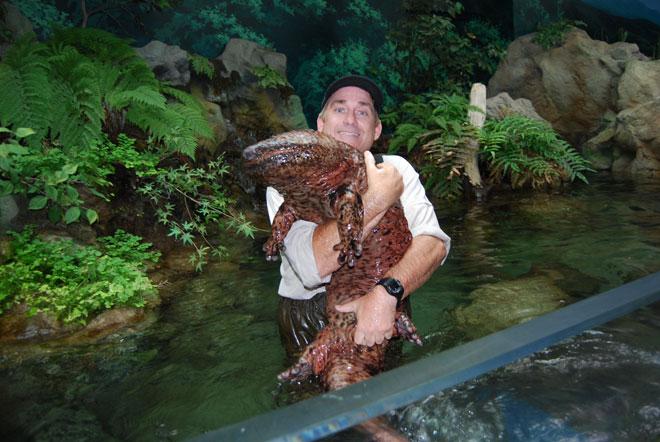 Гигантская саламандра ростом с человека