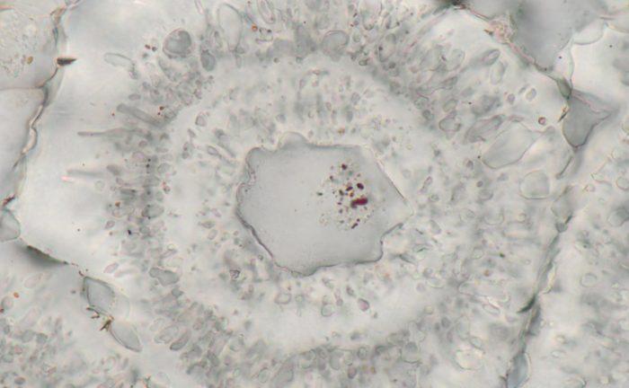 ВКанаде найдены древнейшие следы жизни наЗемле