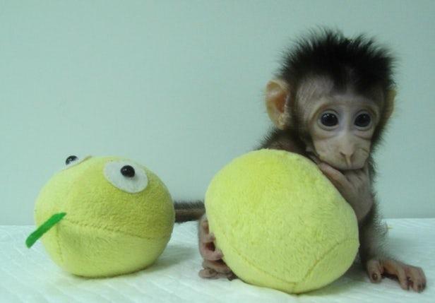 обезьянки аппарат