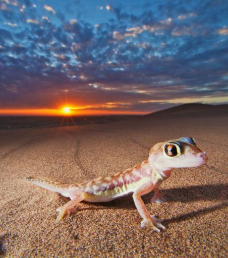 Известный фотограф сфотографировал геккона