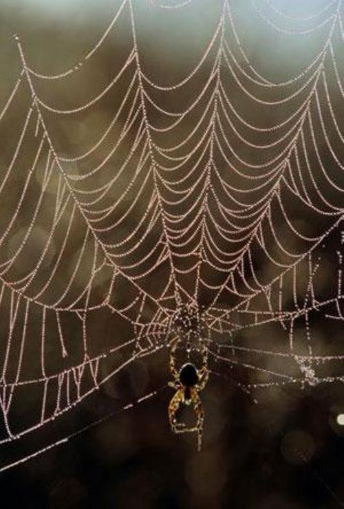 Как сделать паутину человека паука своими руками