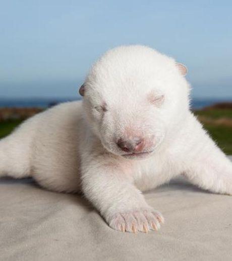 новорождённый медвежонок фото