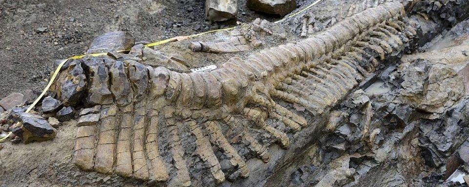 В Мексике найден огромный хвост динозавра